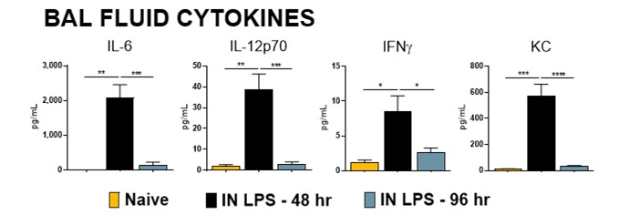 Male Balb/c mice were challenged with 10 μg Lipopolysaccharide (LPS) via intranasal instillation (IN).  Animals were sacrificed at either 48h or 96h post LPS administration.  BALF was analyzed for IL-6, IL-12p70, KC, and IFN-γ protein levels.