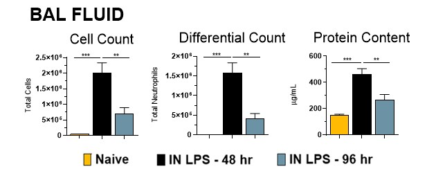 Male Balb/c mice were challenged with 10 μg Lipopolysaccharide (LPS) via intranasal instillation (IN).  Animals were sacrificed at either 48h or 96h post LPS administration. BALF was analyzed for the total cells, total neutrophils, as well as total protein accumulation in the lungs.