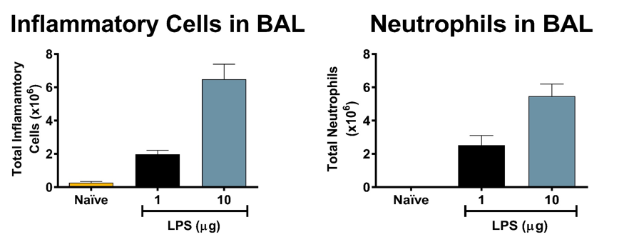 Total inflammatory cells and neutrophils recovered in broncho-alveolar lavage fluid 24 hours after intranasal delivery of LPS demonstrate dose response increase in inflammatory cells.