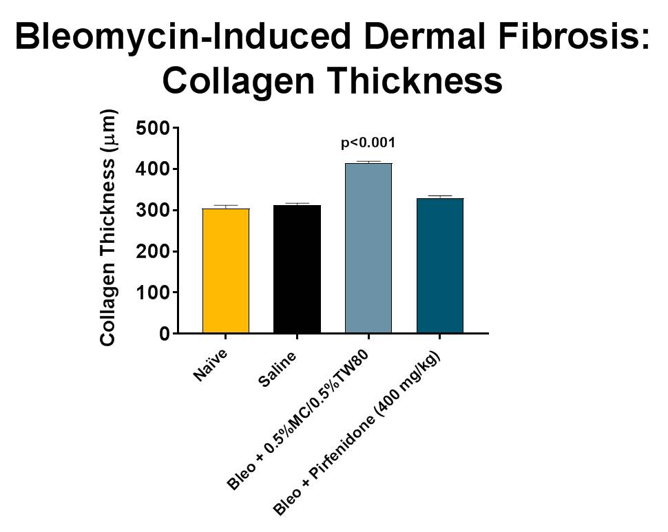Animals received a daily subcutaneous injection of Bleomycin (day 0-27) followed by treatment with either vehicle or Pirfenidone (BID; days 14-27).  Significant thickening of collagen is observed in vehicle treated animals while Pirfenidone prevents significant increases in collagen thickening in this model.