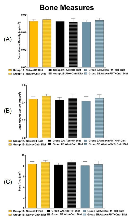 DEXA Bone Measurements: Day 63. (A) Bone Mineral Density, (B) Bone Mineral Content, (C) Bone Area.