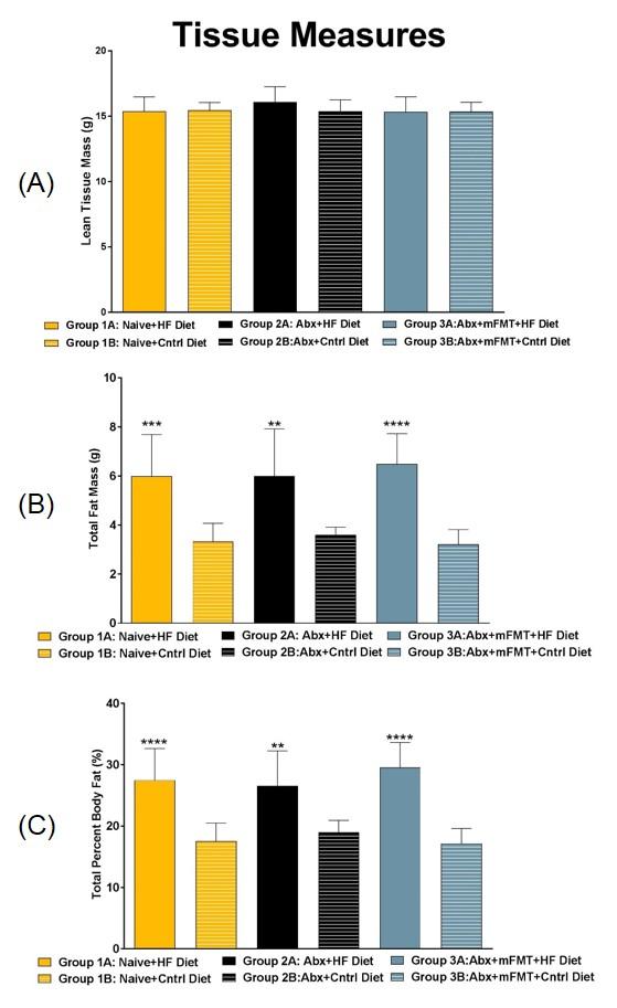 DEXA Tissue Measurements: Day 21. (A) Total Lean Tissue Mass, (B) Total Fat Mass, (C) Total Percent Body Fat.