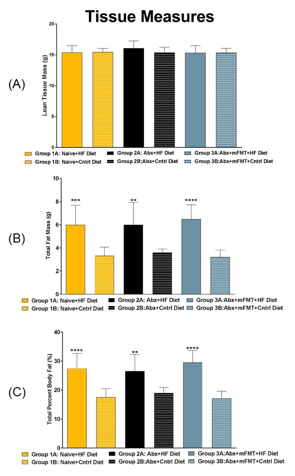 DEXA Tissue Measurements: Day 63. (A) Total Lean Tissue Mass, (B) Total Fat Mass, (C) Total Percent Body Fat.