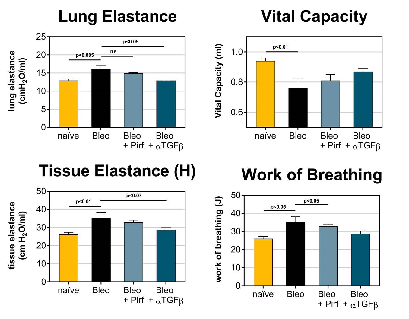 Lung functional measures are improved in mice dosed with Bleomycin (IT) when treated with either Pirfenidone or anti-TGFβ neutralizing antibody.
