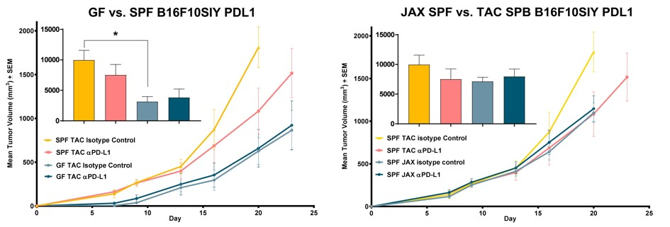 JAX SPF v TAC SPF B16F10SIY PDL1 Relative response of a subcutaneous murine melanoma to immune checkpoint inhibition was assayed in genetically identical mice housed and handled under specific pathogen free protocols and derived from different vendors, previously shown to possess compositionally dissimilar microbiomes.