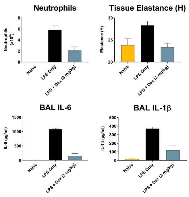 Total neutrophils and IL-6 recovered in broncho-alveolar lavage fluid as well as lung tissue elastance 24 hours after intranasal delivery of LPS. Light blue bars indicate significantly reduced neutrophilia, IL-6 and IL-1β content and lung elastance in LPS challenged mice that received 3 mg/kg dexamethasone I.P. prior to challenge.