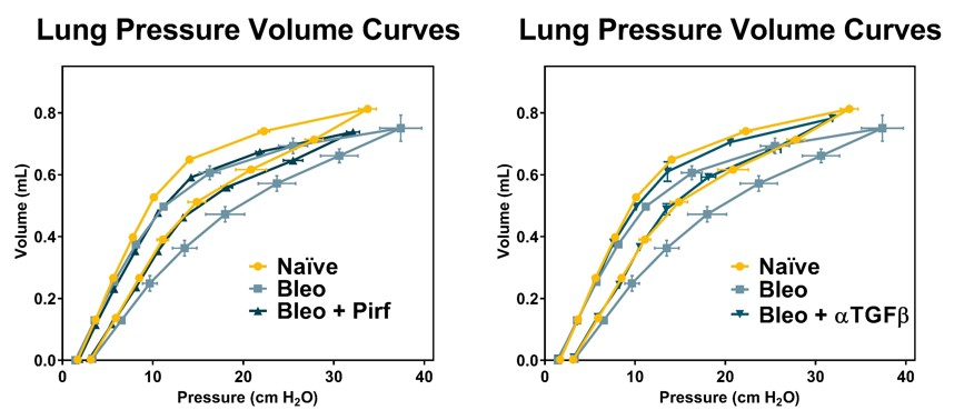 Pressure volume curves show improved lung function in mice dosed with Bleomycin (IT) when treated with either Pirfenidone or anti-TGFβ neutralizing antibody.