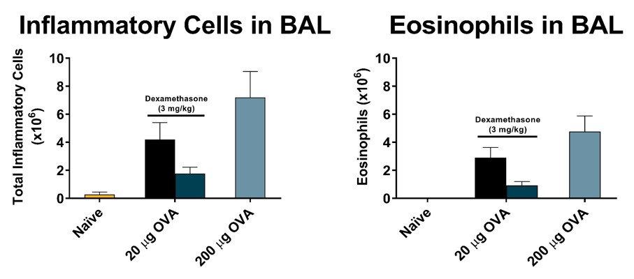 Total inflammatory cells and eosinophils recovered in broncho-alveolar lavage fluid on day 16 of an acute OVA model. Mice demonstrated a dose responsive increase in total cells and eosinophils. Dexamethasone significantly lowered total inflammatory cell counts and eosinophils in the BAL.