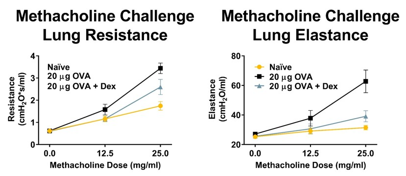 Lung Resistance and Elastance measured day 16 of an acute OVA model. OVA challenge significantly increased lung resistance and elastance parameters as a result of methacholine challenge. Low dose dexamethasone treatment significantly reduced airway hyperreactivity in this model.