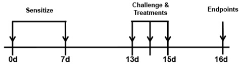 Balb/c mice were sensitized with I.P. injection of OVA with adjuvant on days 0 and 7. Mice were challenged with 20 or 200 µg OVA intranasally. A subset of the animals received low dose dexamethasone (0.3 mg/kg) I.P. 1 hour prior to challenge.
