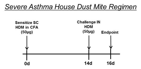 In a severe asthma HDM model Balb/c mice were sensitized via SC administration of 50 µg HDM in CFA on day 0. Mice were challenged with 50 µg HDM intranasally on Day 14. Positive control and test article treatments generally days 13-16.