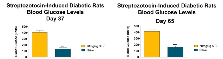 Streptozotocin-induced Diabetic Rats Blood Glucose Levels (Days 37 and 65)