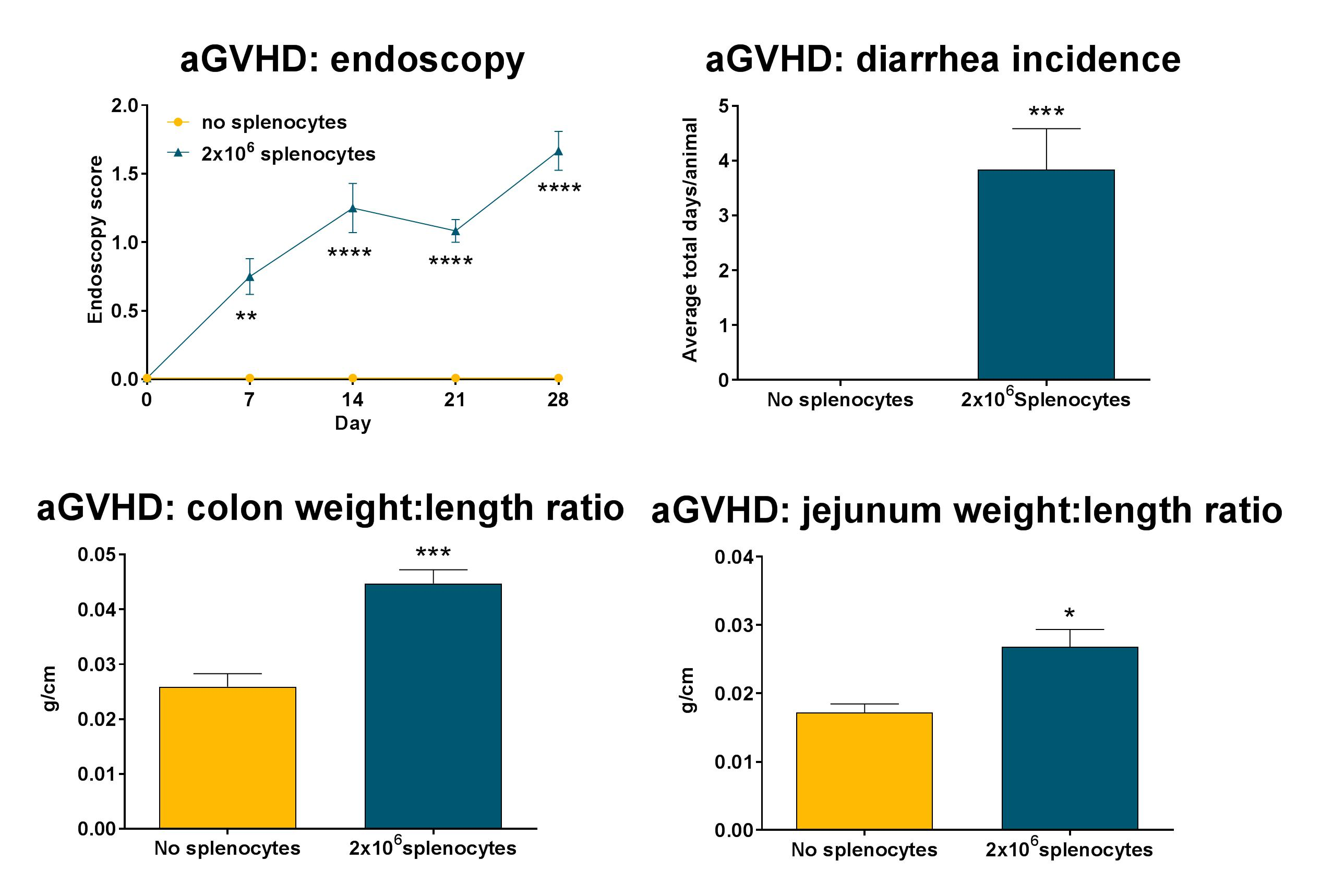 Recipient mice were pre-conditioned and transplanted with 1x107donor-derived CD3-depleted bone marrow cells supplemented with different numbers of splenocytes (see legend) on day 0. Presence or absence of diarrhea was assessed daily. Endoscopy was carried out on a weekly basis from day 0 to day 28. At sacrifice, the colon and jejunum were excised, flushed, weighed, and measured. Statistical evaluation by two-way ANOVA with Holm-Šidák's multiple comparison post-test (endoscopy scores), or Student's t-test (