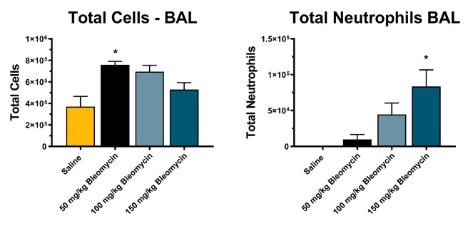 Increased inflammatory cells are found in bronchoalveolar lavage fluid of animals exposed to subcutaneous osmotic pump-delivered bleomycin